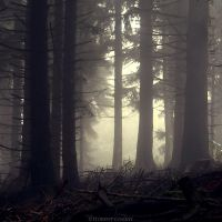 Deeper in the Woods by FlorentCourty