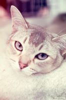 cat by Photografxgirl