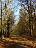 autumn in the forest III by Mittelfranke