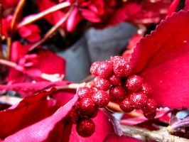 Glitter Dusted Berries by below-the-surf