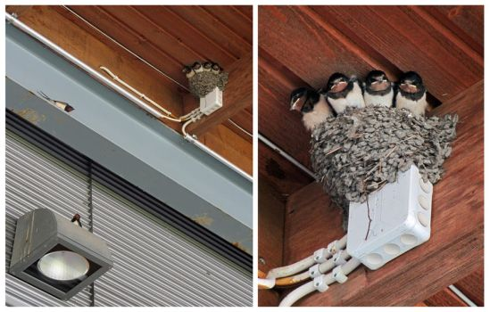 Bird family above a terrace by Wolverica