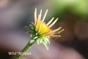 Beautiful and Fragile by WildWinyan