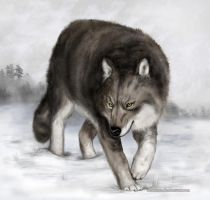 Wolf by LauraMSS