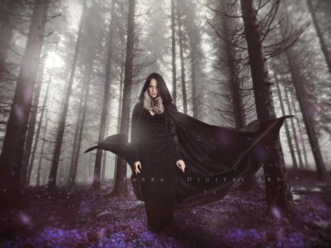 Dark forest by Aeternum-designs