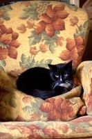 In a English chair by DaisyreeB
