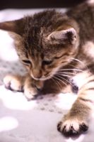 baby cat by lydelodia