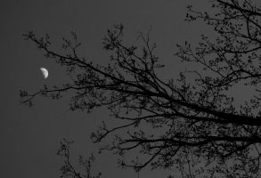 Tree Eats the Moon by Suinaliath