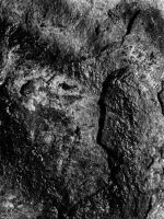 Rock detail by dowekeller
