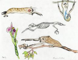 The Future Gets Wilder: Mantisfinches by Pterosaur-Freak