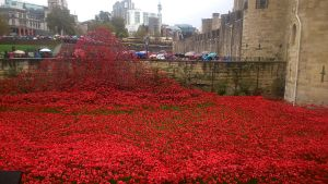 Remembrance Display of Poppies 2014 by Lord-Storm