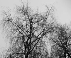 Black'N'White Willow by Fishingkid
