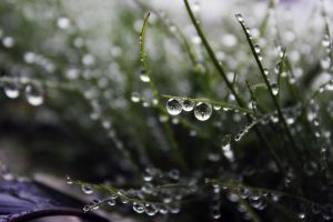 Droplets on grass by Mitowira