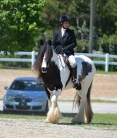 Gypsy Mare 5-2-15 by Tailgun2009