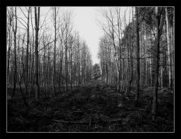 Yorkshire Woods by Bourbons3
