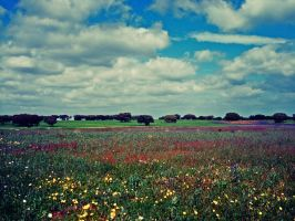 rainbow fields by nhamiii