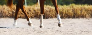 Tiptoe by EquineImages