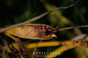 IMG_0938 by D3vilusion