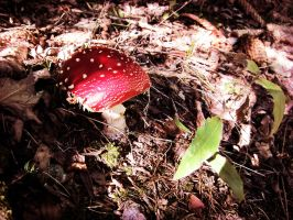 a lonely tiny mushroom by JackTheLateRiser