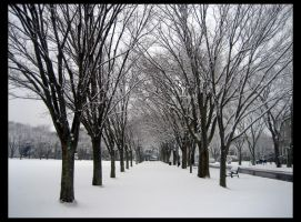 Snow Day: Path of Trees by shuttermonkey