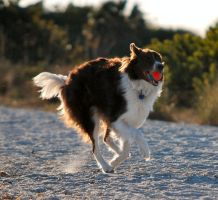Dog and Ball by CompassLogicStock