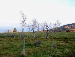 Dancing Trees Stock 3 by philippeL-stock