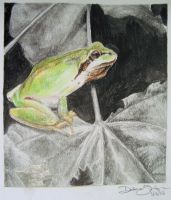 Treefrog by clouded-ambition