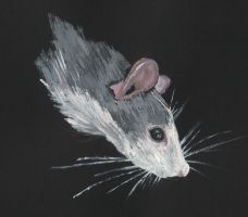 Rat by vonumbourg