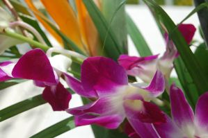 Stock 378 - Orchid by pink-stock