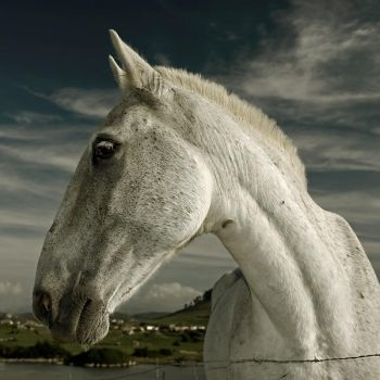 horse by nagual78