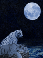 Night tigers by o0muggledude0o