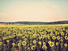 fields of gold by Leinikki