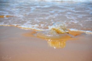 Jellyfish by TaliNatPhotography