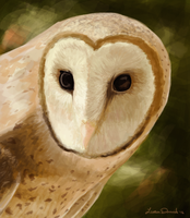 Barn Owl by threefourthsginger