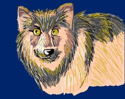 Save the Gray Wolf! Please read the links! by Aisheyru-Fox
