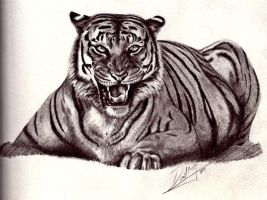 Tiger Graphite by superchickenn123