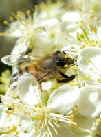 Bee by MichelePrz