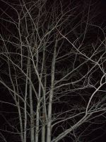 Night Branches by Rubyfire14-Stock