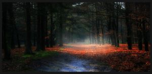 The silence of the forrest... by simoner