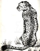 Cheetah Pen and Ink by CozmicDreamer