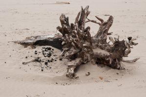 Driftwood Stock 1 by slave-screams-stock