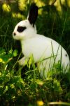 Charlie Mini Rex by WickedFrost007
