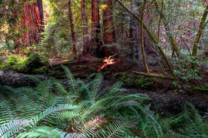 Forest ferns by PaulWeber