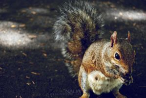 Squirrel 2 by Xypop