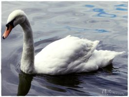 Swan by moonik9