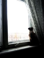 Outside the window by White-Wolf-Redgrave