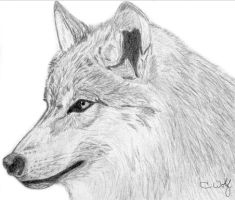 .Wolf - Side Profile. by White-Wolfen