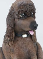 Poodle 3D Cake by Verusca
