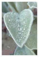 ALL HEART by TeaPhotography