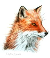Red fox by SpartanB214