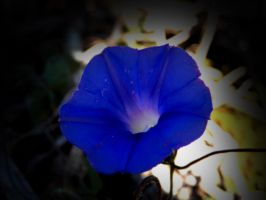 Some type of blue flower... by elijahvivio1996